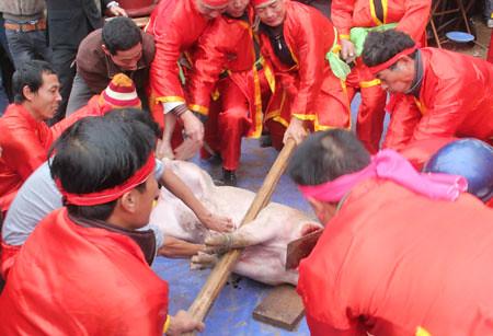 6794338159 400cc54ae1 Lễ hội Chạy lợn ở Hà Nội Nóng bừng 3 phút mổ lợn khao quân