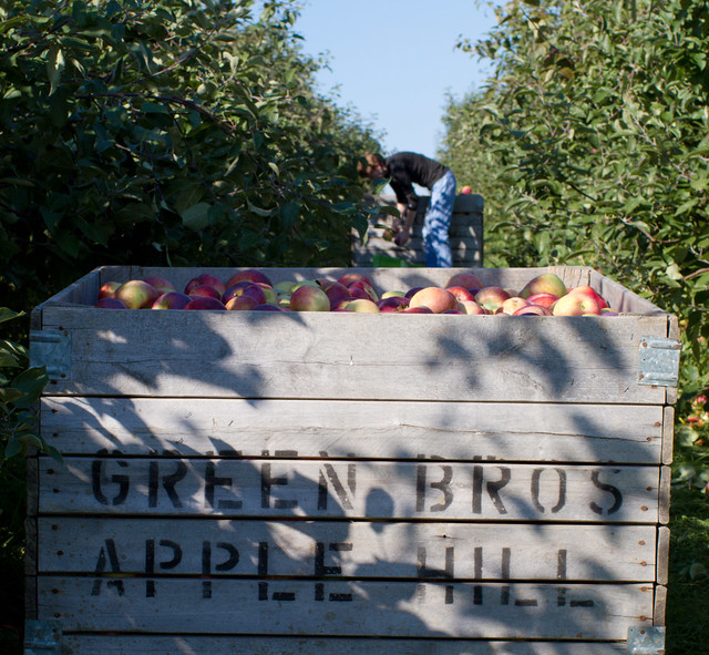 Apple Hill Farms in Binghamton, NY  CC image courtesy of Chris Waits on Flickr