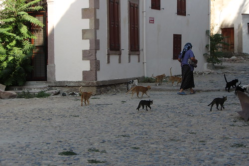 Burhaniye day 2 (Ayvalik): catlady