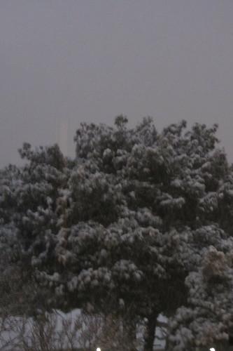 Winderwonderland Balikesir: tree topped with snow