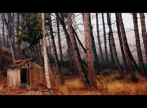 trees winter tree fog greece macedonia grecia griechenland grece kilkis makedonia mazedonien axioupolis polykastro