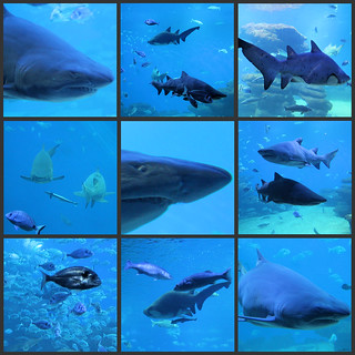 """The Big Blue"" is Palma Aquarium's shark tank. It's the deepest tank in Europe and as well as four different species of shark, two species of ray and many assorted fish, it holds three and a half million litres of sea water."