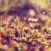 .Fairy Land. by ǝıqqǝp