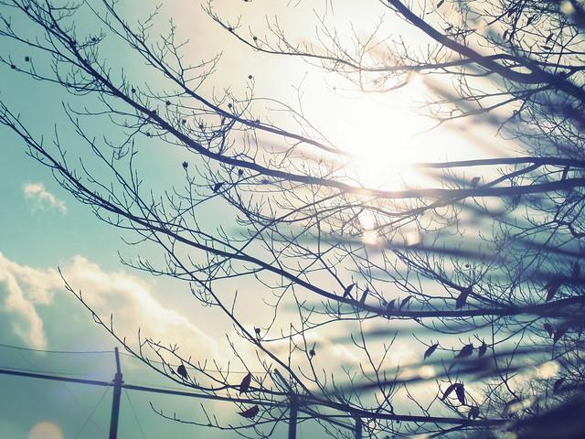 冷たい木漏れ日