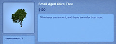 Small Aged Olive Tree