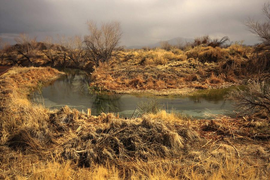 Ash Meadows