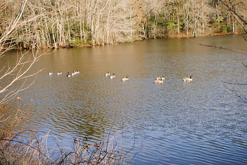 statepark park water birds geese pond goose delaware laurel laurelde trappondstatepark sussexcountyde