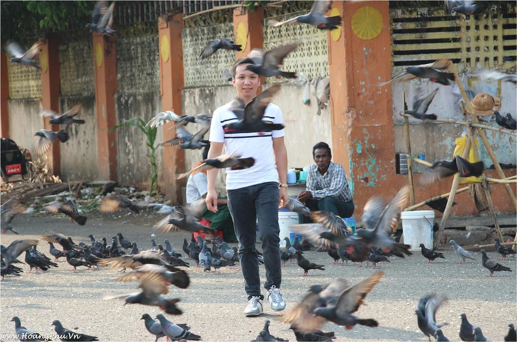 Walking in the doves