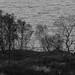Trees Along Loch Na Dal