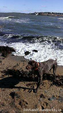 [Reunited] Wed, Apr 16th, 2014 Lost Male Dog - Airport Business Park, Waterford