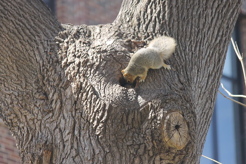 Springtime in Ann Arbor - with Squirrels (University of Michigan - April 23, 2014)
