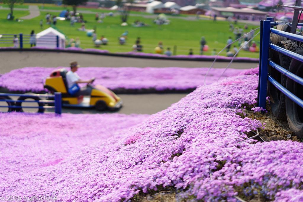 東藻琴芝桜公園-16