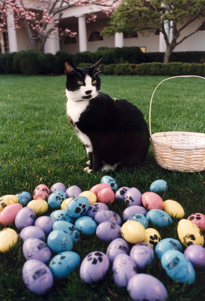 Photograph of Socks the Cat Posing Next to Easter Eggs Decorated with Paw Prints: 04/01/1994