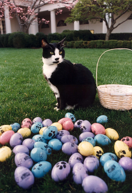 cat's Easter greetings from a dog lover