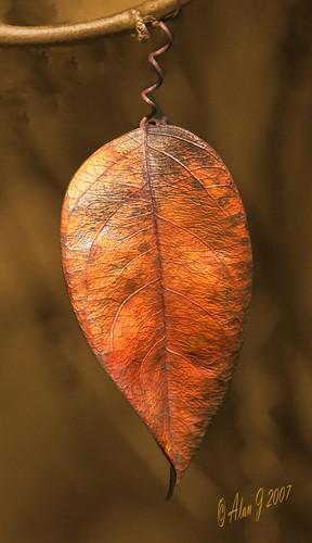autumn canon florida 7d 100mmmacrof28lisusm