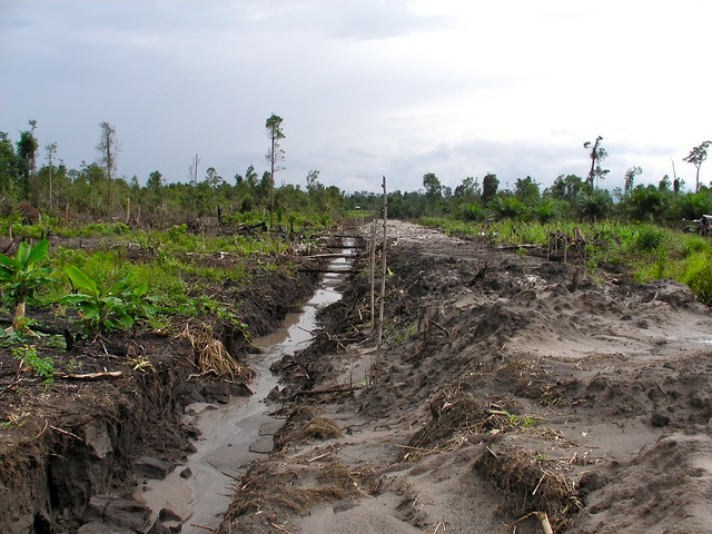 photo of a devastated tropical landscape