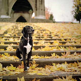 a canine in cathedral park