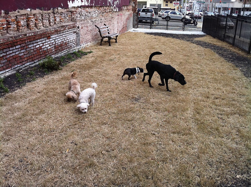 Party at the Barking Lot, Memphis, Tenn.