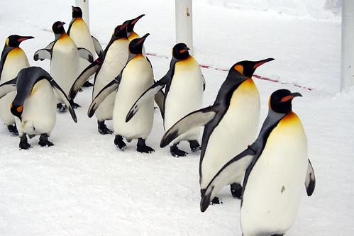 ペンギン散歩