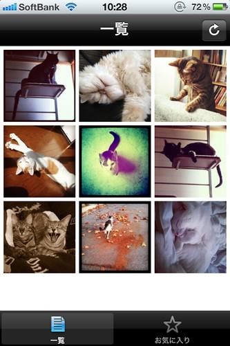無料猫画像