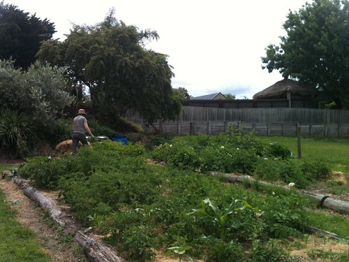 Narre North Organic Garden
