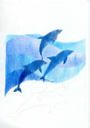 2011_07_05_dolphin_01
