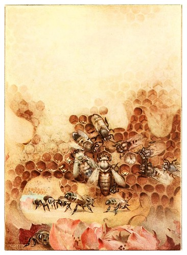 015-La reina-The life of the bee 1901-Ilustrada por Edward Detmold