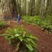 Stout Grove, Jedediah Smith Redwoods State Park, CA by SteveD.