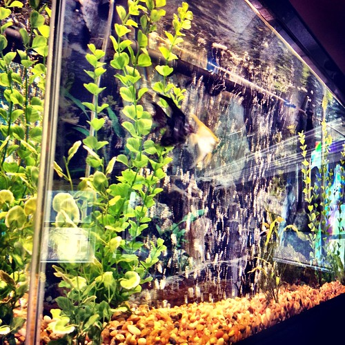 Natural and thrifty in 365 123 use dirty fish tank water for Dirty fish tank