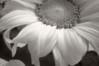 pinhole infrared DSC_8531x