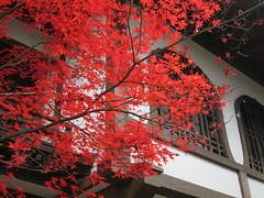 Autumn colors at Eikan-dō Zenrin-ji Temple in Kyoto, Japan: 永観堂禅林寺の紅葉、京都、日本