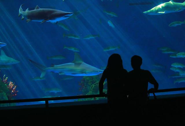 seaworld aquarium back from san antonio texas had a