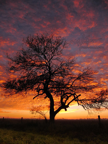 winter red orange sun tree field weather silhouette yellow clouds sunrise fence landscape texas mesquite posts brownsville bocachica