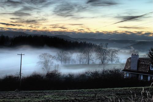 trees sunset mist canada weather fog landscape day bc farm farmland vancouverisland sidney