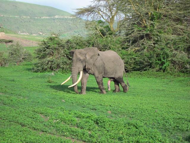Five-Legged Elephant