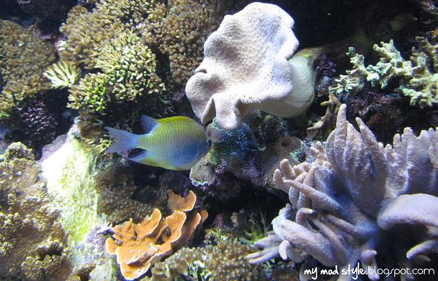 Denver Aquarium 1