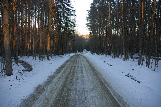 Red Pine Forest Road