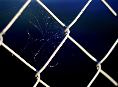 September 29, 2010: spiderweb