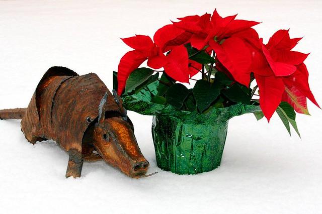 It's an armadillo Christmas!