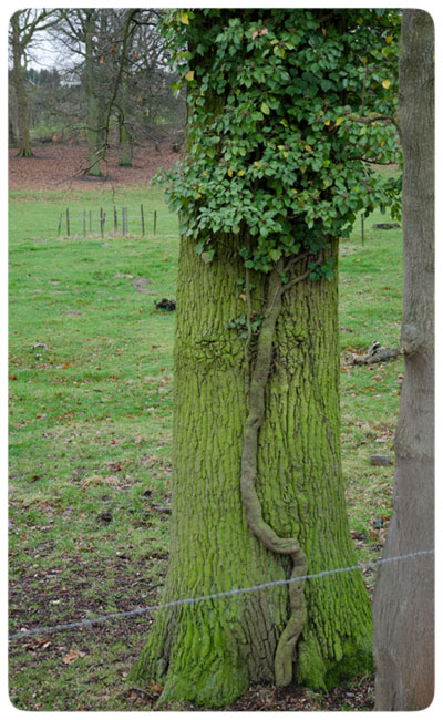 Green-tree-on-tree