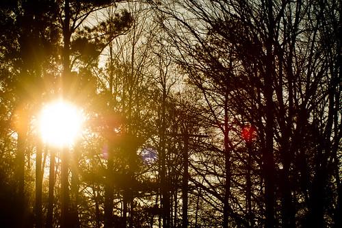 trees sun nature silhouette sunrise georgia flare lagrange troupcounty thesussman sonyalphadslra550 sonyalphadslra500