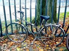 RIH damessportfiets (mixte bike, v�lo mi-course dame), Amsterdam, Olympiaplein, 10-2011