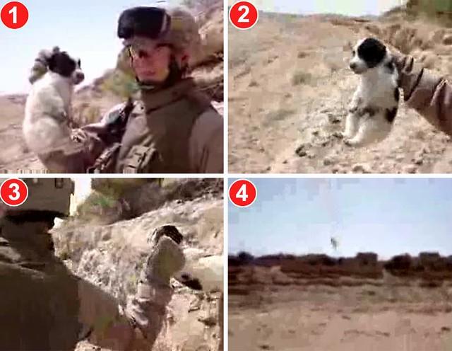 American_Soldier_Kills_Puppy_01