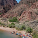 Grand Canyon National Park: Phantom Ranch Boat Beach 0022