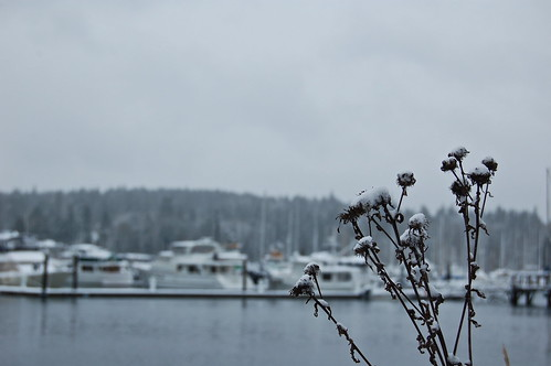 chilly harbor