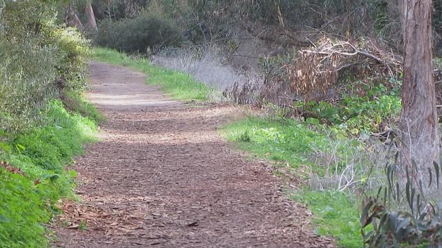 MVI_0863 Monarch butterfly cluster  Santa Barbara Shores, Sperling Preserve