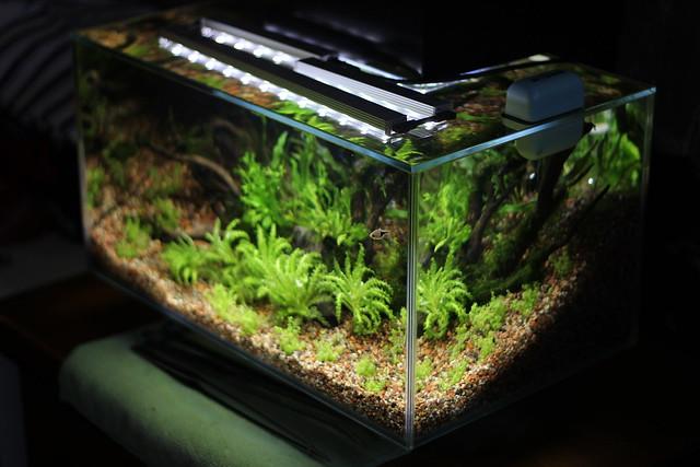 Edge Led Aquarium Light