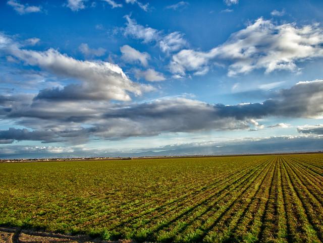 carrotsofthefield