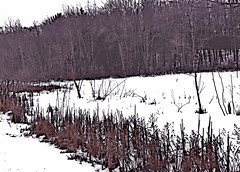 Snow, Field, and Trees (Digital Woodcut) by randubnick