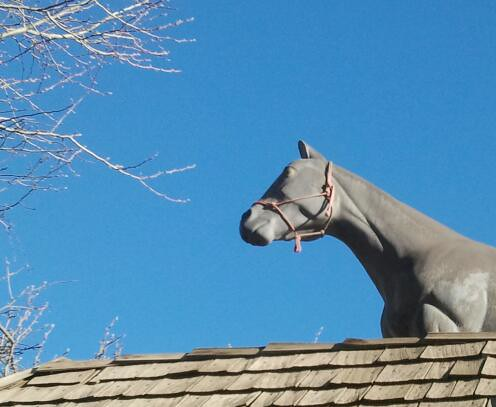 Horse on a Roof by Jodi K.